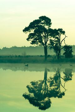 Strabrechtse Heide 194 sur Desh amer