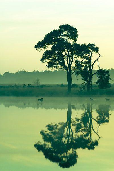 Strabrechtse Heide 194