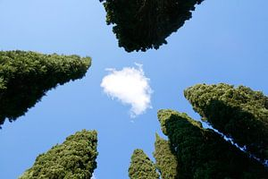 Cypressen: Italië!