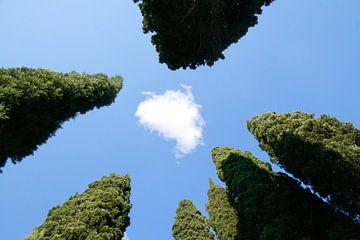 Cypressen: Italië! van Rens Kromhout