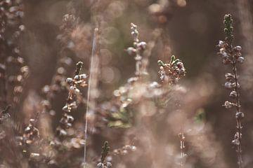 Kleine Wiese von Bjorn Cornelissen