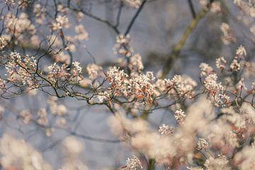 Blühende Zweige von André Scherpenberg