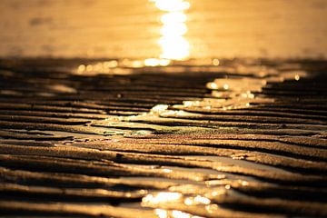 sable doré sur Tania Perneel