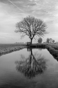 Spiegeling, Reflection van