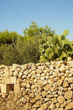 Muur met cactusfruitplant van Jadzia Klimkiewicz