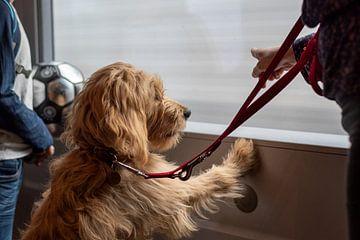 Hund schaut aus fahrendem Zug von Stephan Schulz