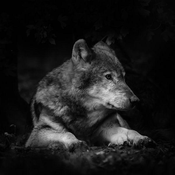 Wolf von Jon Geypen