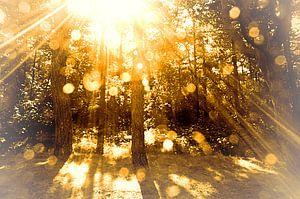 dawn at golden wood