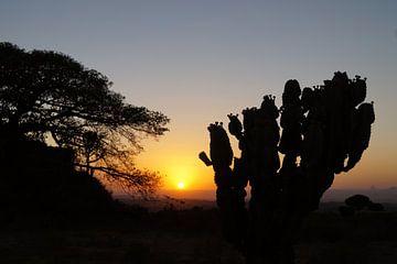 Landschap van Gerealta Ethiopia ondergaande zon van