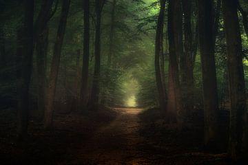 Een prachtige ochtend in het Speulderbos von Tim Abeln