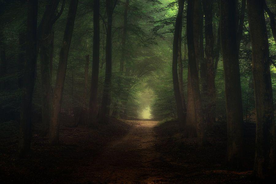 Een prachtige ochtend in het Speulderbos van Tim Abeln