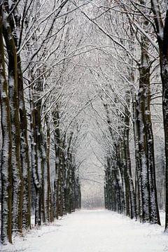 Winterbos sur Ronald Jansen