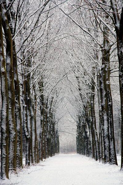 Winterbos van Ronald Jansen