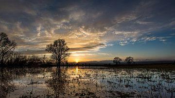 swamp von Michel de Koning