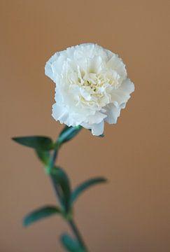 Schöne weiße Nelke von Puck Bertens