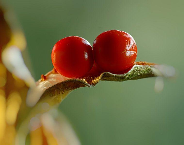 Mooi rood van Marlies Prieckaerts