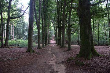 Bomen in het Amerongse bos van Merijn Loch