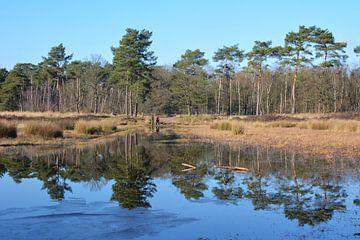 Reflexion von Nadelbäumen in den Niedermooren von Noord-Brabant von My Footprints