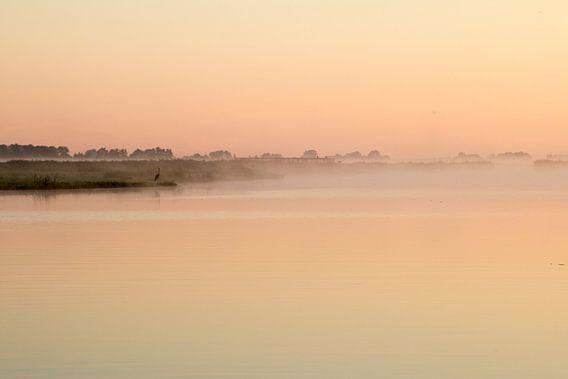 De reiger in de mist in het Wormer en Jisperveld