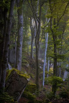 De mooie bossen met rotsen in het Mullerthal in Luxemburg. van Jos Pannekoek