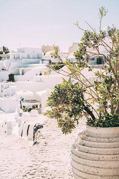Bloempot in Santorini van Patrycja Polechonska