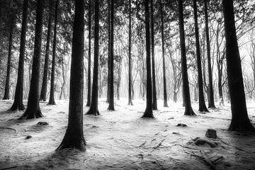 Sneeuw in het bos van Niels Barto