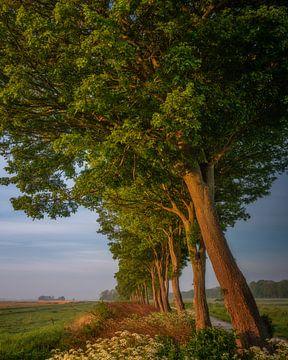 Brillante Bäume von Bart Hendrix