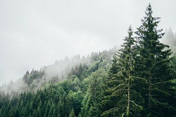 Mist in het Bos van