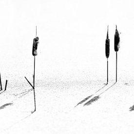 Lisdoode in Eisschwarz und Weiß von Anouschka Hendriks
