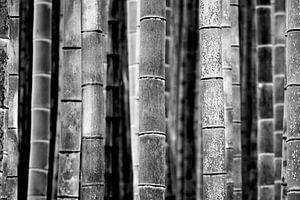 Bamboe stammen (zwart-wit) van