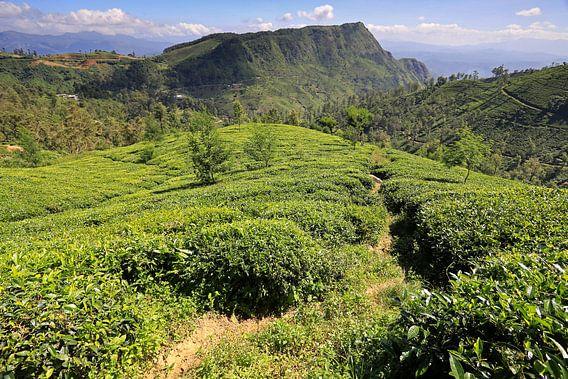 Theevelden in de binnenlanden van Sri Lanka van Antwan Janssen