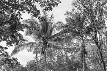 Go coconuts von DsDuppenPhotography