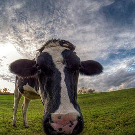 Kuh - die kuuhlste auf der Weide von Carina Buchspies