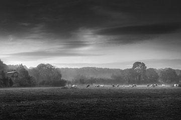 Koeien in weiland  van Vladimir Fotografie