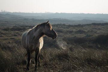 wildes Pferd in den Dünen von Jitske Cuperus-Walstra