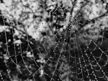 Spinnennetz mit Wassertropfen von Christian Mueller