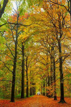 Boswandeling in de herfst sur Karel Warburg