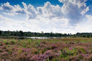 das violette Heidekraut sieht toll aus, mit schönen Wolken am Himmel gibt es eine schöne Atmosphäre von Lieke van Grinsven van Aarle