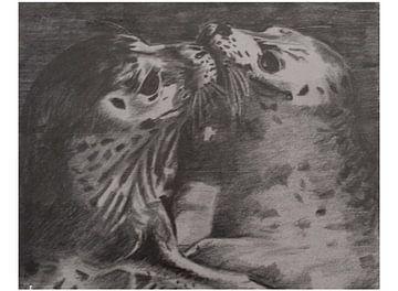 Zeehondjes von Gé Rensen