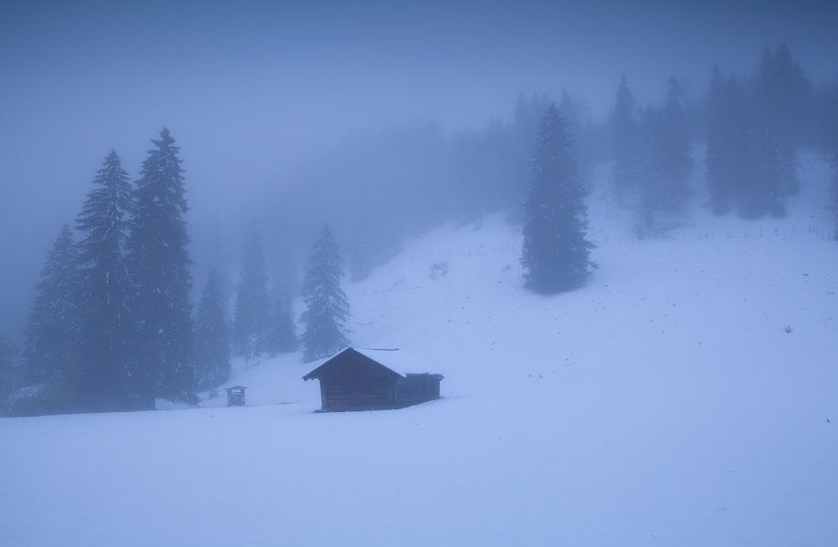 Hidden in the snow van Olha Rohulya