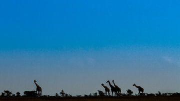 Giraffen silhouetten von Van Renselaar Fotografie