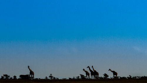 Giraffen silhouetten van Van Renselaar Fotografie