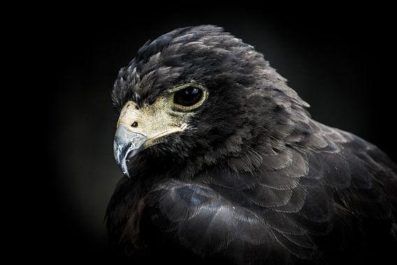 Portret van een roofvogel