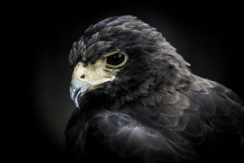 Portret van een roofvogel van Pureframed Photos