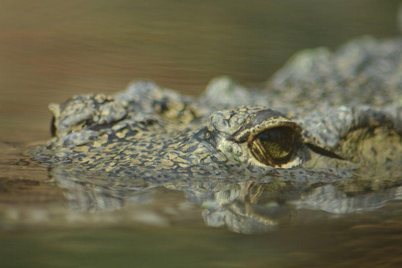 Krokodil van FotoGraaG Hanneke