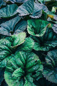 Dunkelgrüne Blätter von Patrycja Polechonska