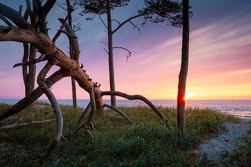 Sonnenuntergang am Weststrand II von Martin Wasilewski