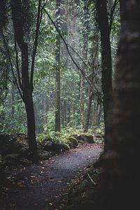 Regenwald-Pfad