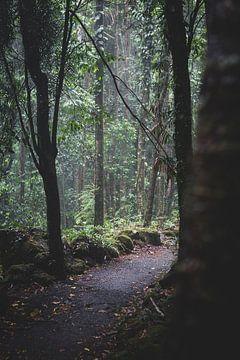 Regenwald-Pfad von Ennio Brehm