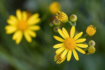 Gele bloemen von Jos Reimering